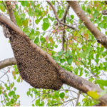 What To Do If You See a Bee Swarm