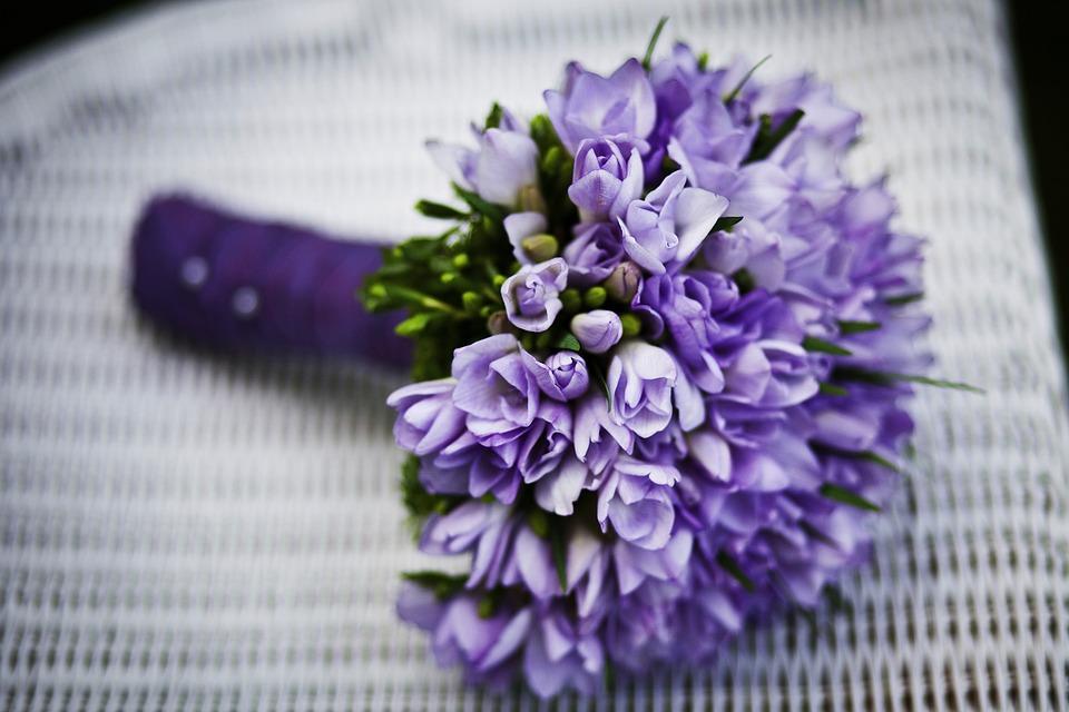 flowers-plant