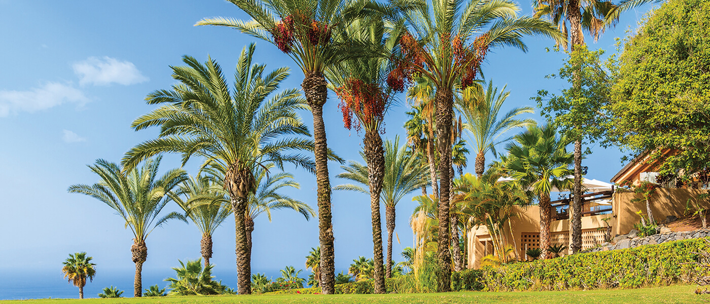 Date-Palm-Trees